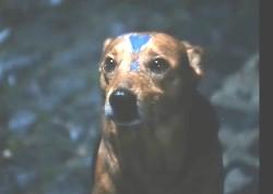 cane blu notte