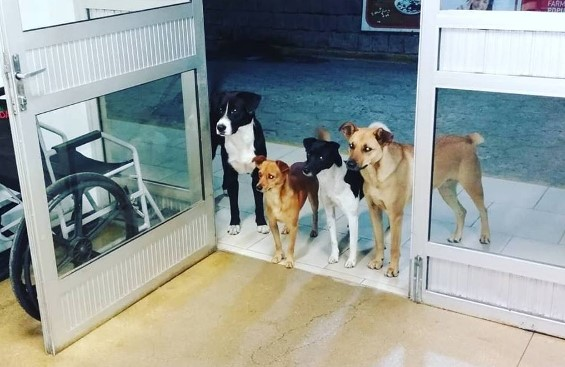 cani aspettano padrone2