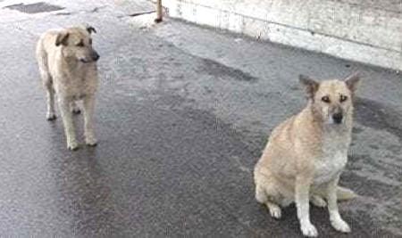 cani-attendono padrone